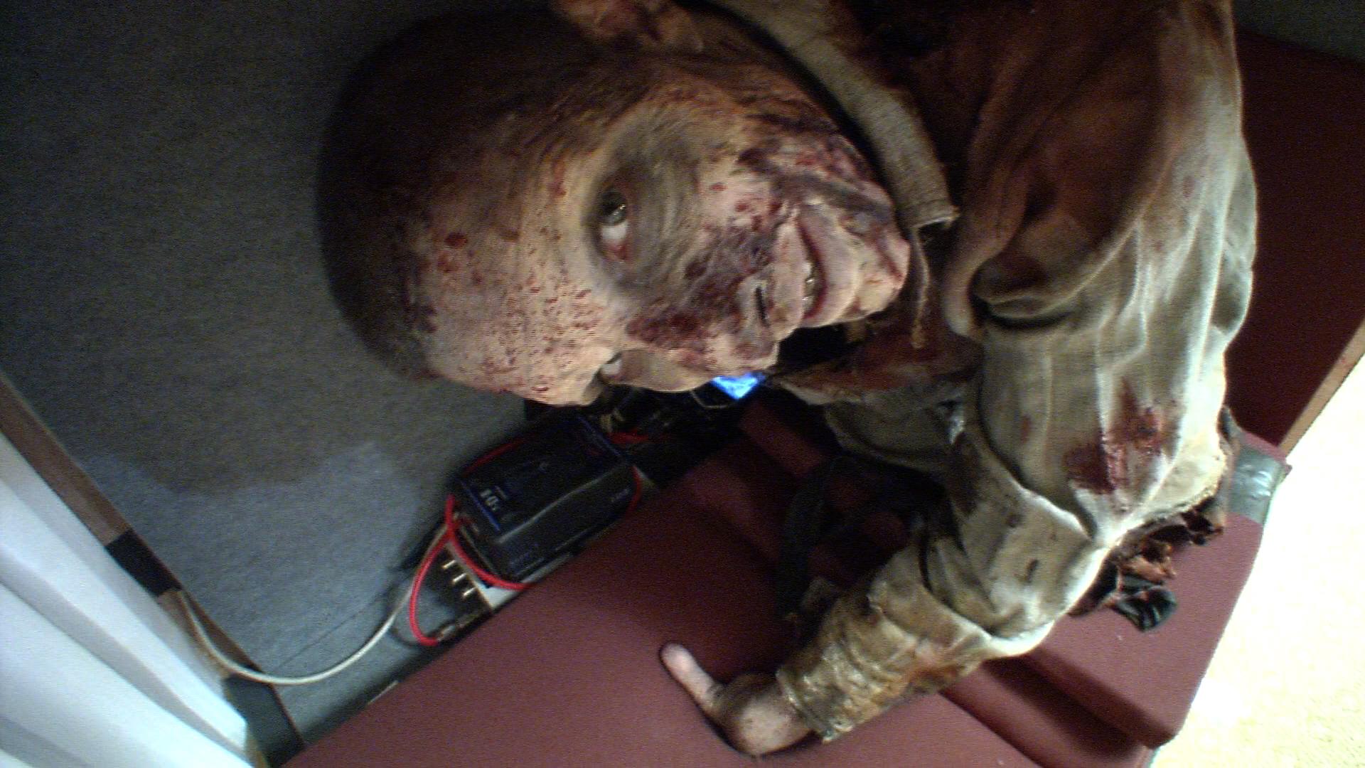 Andy Lincoln & The Walking Dead Fan Prank Norman Reedus